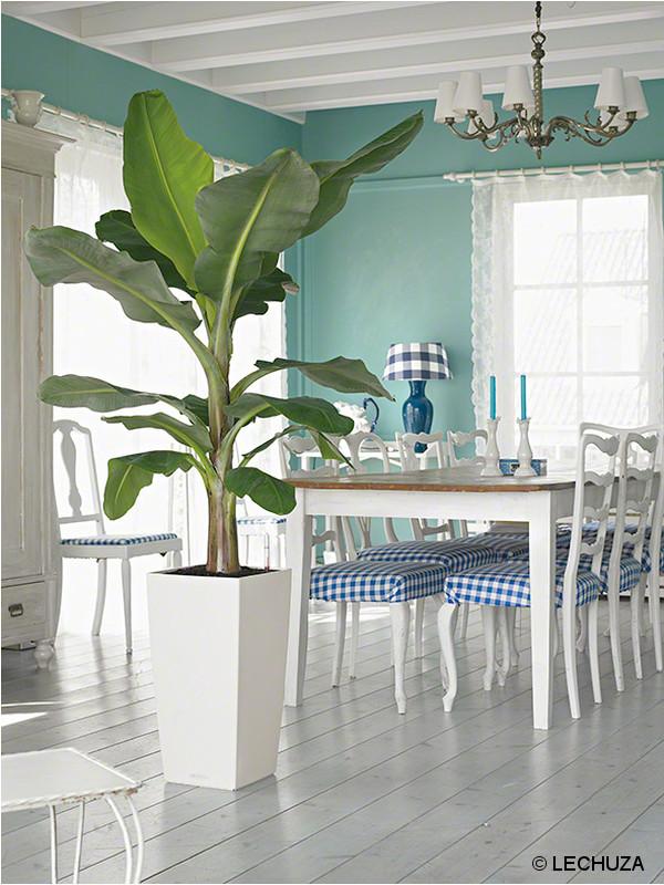 5 id es pour rendre vos plantes encore plus belles for Cache pot design interieur