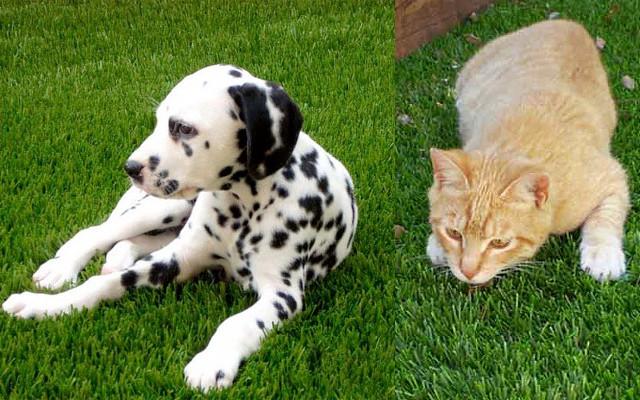 Chiens et chats sur du gazon synth tique for Acheter piscine pour chien