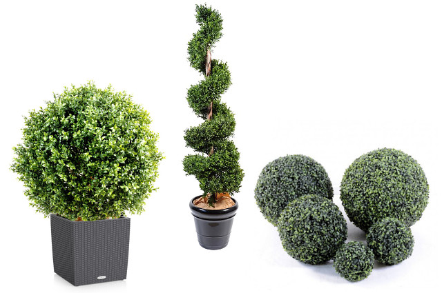 le buis artificiel une alternative au buxus sempervirens. Black Bedroom Furniture Sets. Home Design Ideas
